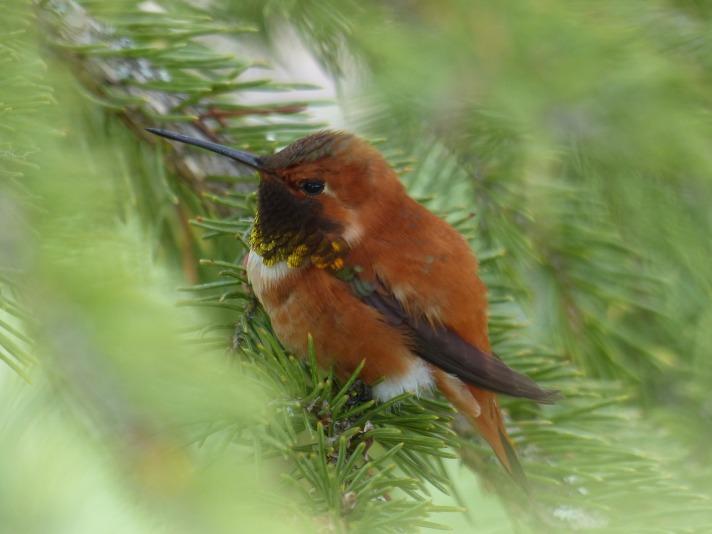 hummingbird-2876454_1920.jpg